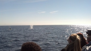 Whale watching off the coast of San Diego.